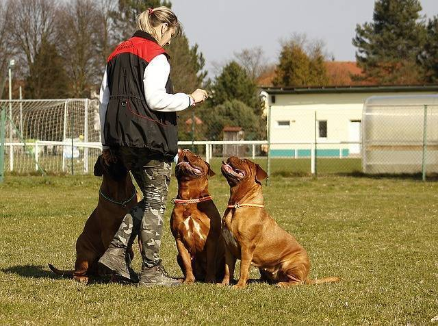 Bundeswehr Hundeführer