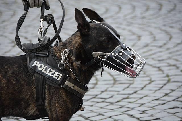 Hundestaffel
